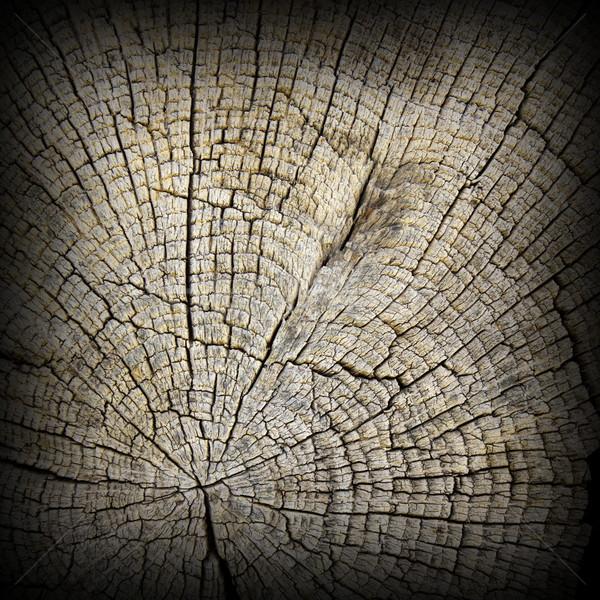 érdekes mintázott tölgy fa részleg öreg Stock fotó © taviphoto
