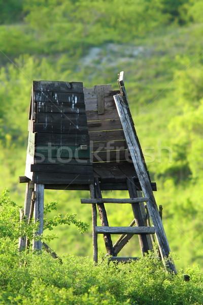狩猟 木製 良い 野生動物 ストックフォト © taviphoto