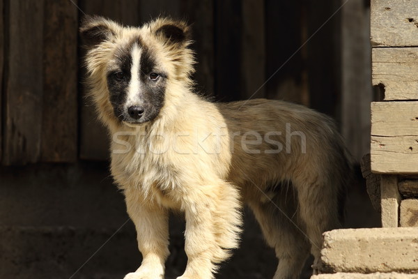 Toutou grange cute permanent ferme triste Photo stock © taviphoto