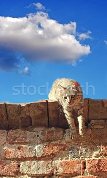 Tembel kedi çatı ayakta terkedilmiş ev Stok fotoğraf © taviphoto