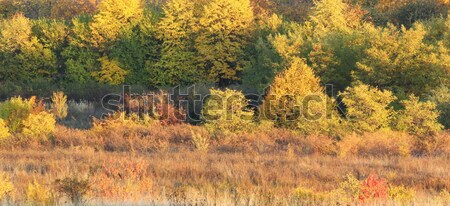 autumn warm colors Stock photo © taviphoto