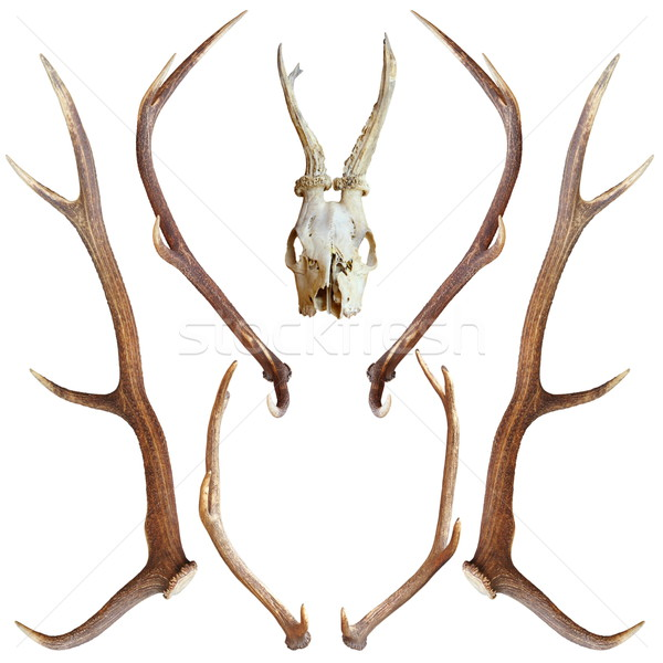 collection of hunting trophies Stock photo © taviphoto