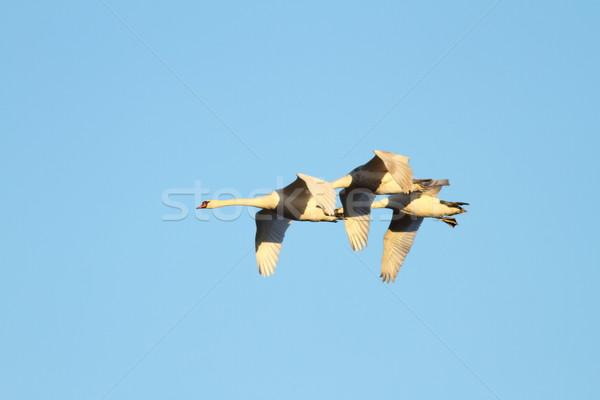 Sereg néma repülés kék ég égbolt kék Stock fotó © taviphoto