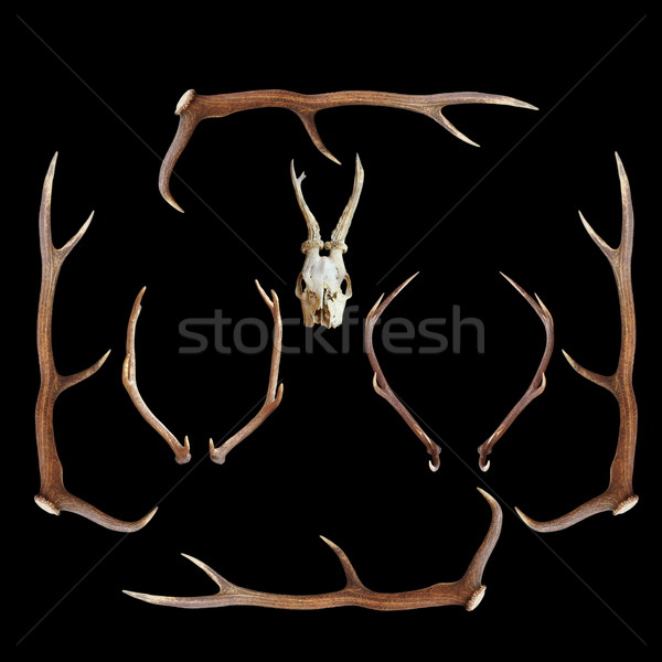 deer hunting trophies on dark background Stock photo © taviphoto