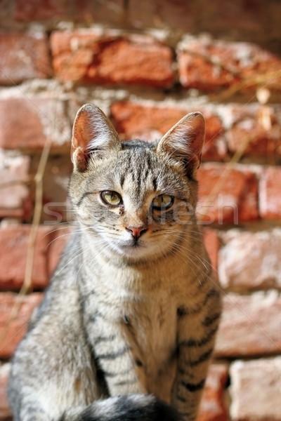 Foto stock: Curioso · gatinho · retrato · jovem · olhando · câmera