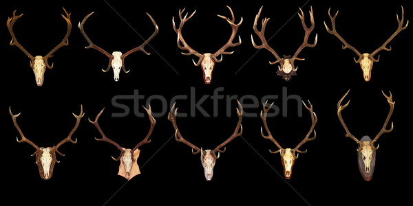 Grande coleção caça troféus preto vermelho Foto stock © taviphoto