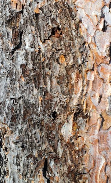 Сток-фото: подробность · соснового · Кора · старые · дерево