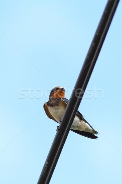 納屋 立って 電気 ケーブル 自然 鳥 ストックフォト © taviphoto