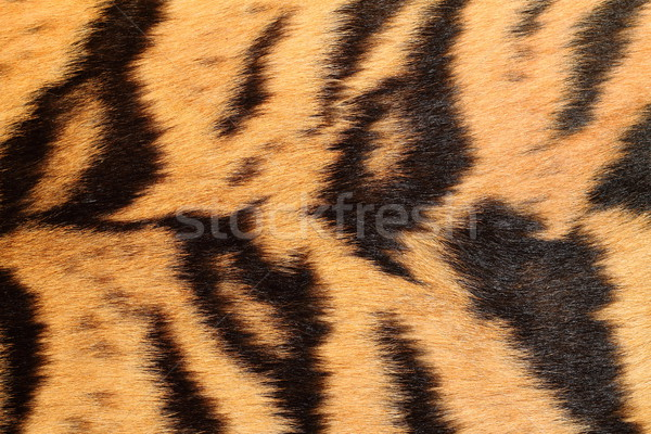 details on real tiger fur Stock photo © taviphoto