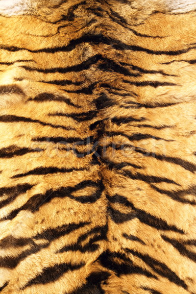 stripes on tiger pelt Stock photo © taviphoto