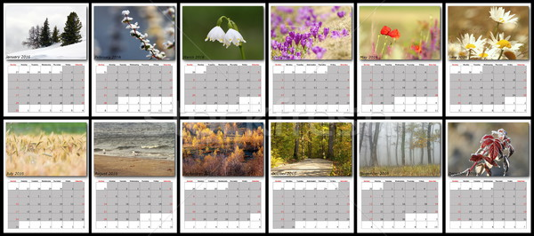 nature calendar year 2016 Stock photo © taviphoto