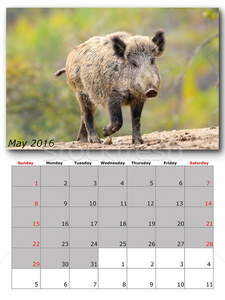 Vadvilág naptár 2016 nyomtatott oldal elrendezés Stock fotó © taviphoto