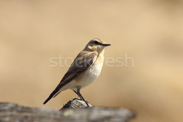 Stock fotó: Női · északi · közelkép · természet · madár · egyedül
