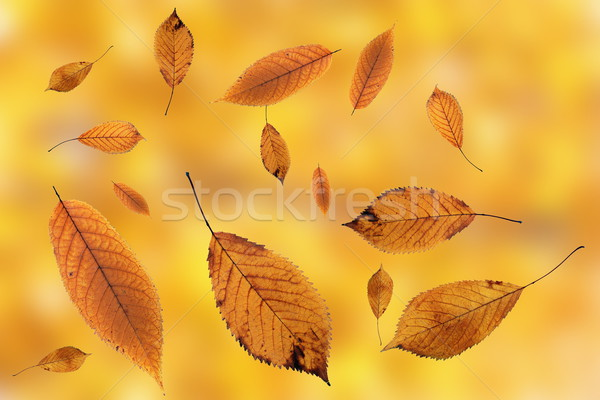 leaves falling on ground over autumn background Stock photo © taviphoto