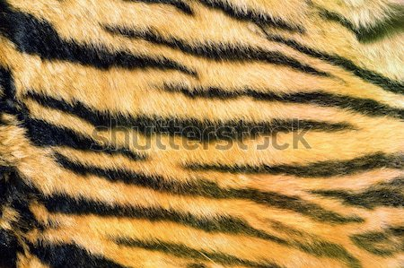 wild feline  textured fur Stock photo © taviphoto