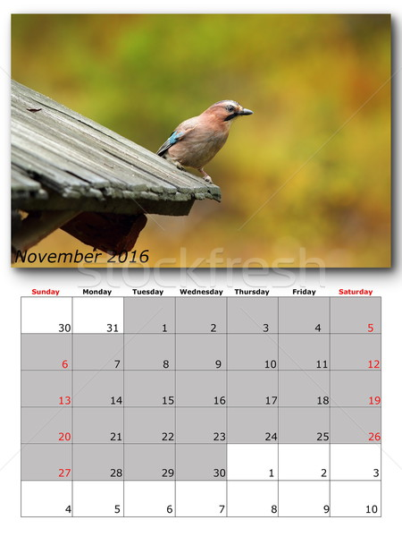 garden birds calendar  november 2016 Stock photo © taviphoto