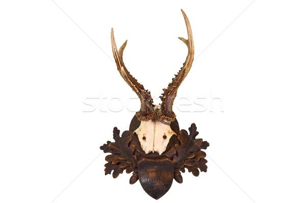 Stock fotó: Izolált · ikra · szarvas · vadászat · trófea · fehér