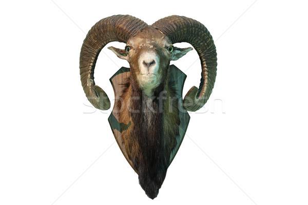 ストックフォト: 孤立した · 狩猟 · トロフィー · 白 · 頭