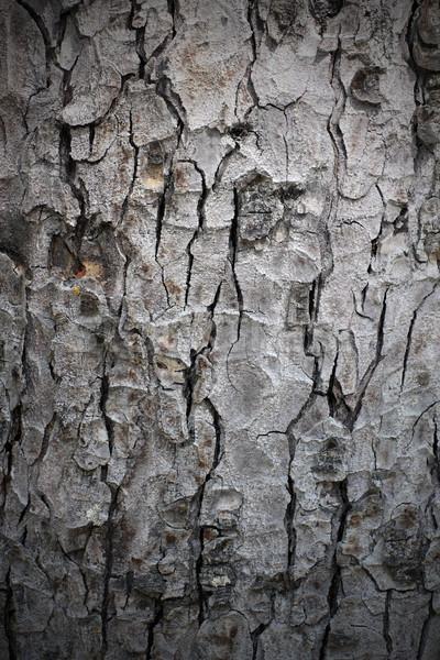 Naturelles structure écorce pin nature Photo stock © taviphoto