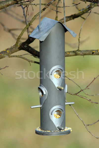 seed feeder for wild birds Stock photo © taviphoto