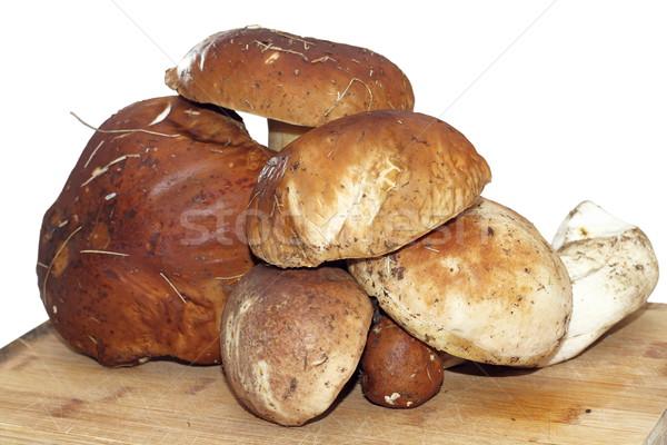 Paddestoel oud hout plaat isolatie witte voedsel Stockfoto © taviphoto