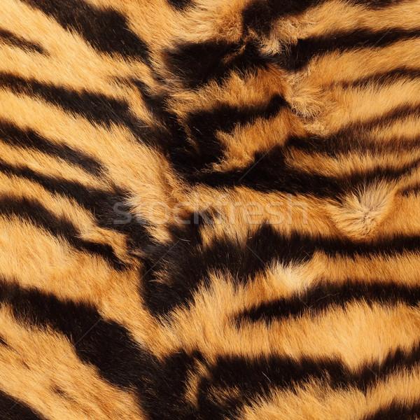 stripes on a tiger pelt Stock photo © taviphoto