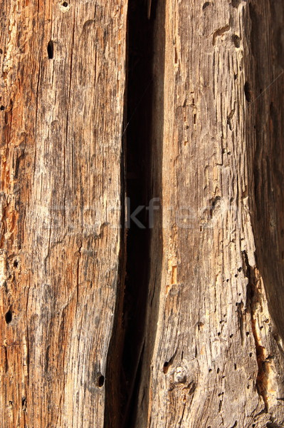 Zdjęcia stock: Starych · dąb · drewna · uszkodzony · owadów · pęknięty