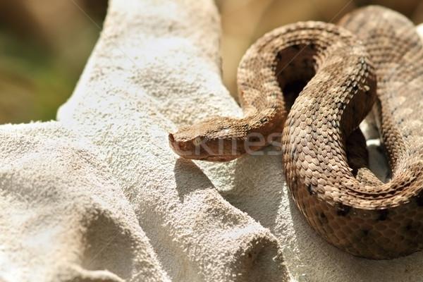 Tehlikeli avrupa yılan eldiven Stok fotoğraf © taviphoto