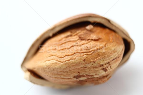 abstract view of a hazelnut Stock photo © taviphoto