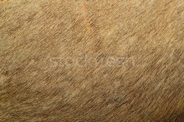 red deer textured fur Stock photo © taviphoto