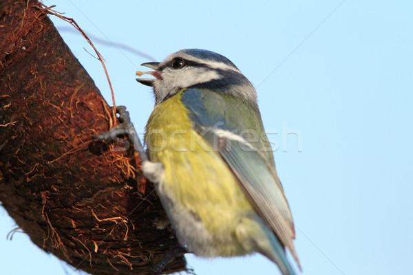 Foto stock: Azul · teta · alimentação · coco · comida · natureza