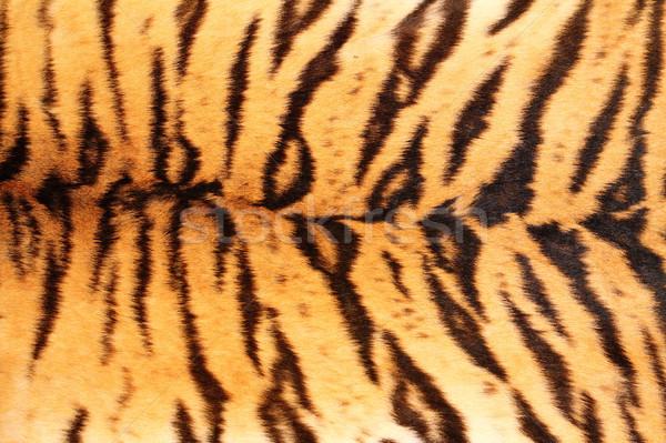 black stripes on tiger textured pelt Stock photo © taviphoto