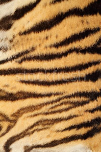 Tigris igazi szőr színes természetes minta Stock fotó © taviphoto