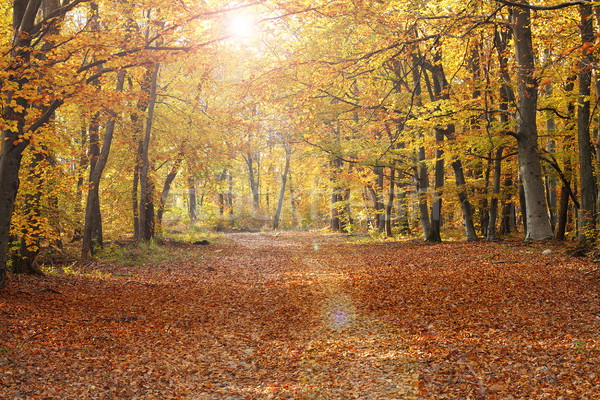 pedestrian path in autumn forest Stock photo © taviphoto