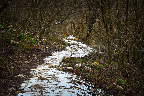 pedestrian path in the forest, winter scene Stock photo © taviphoto