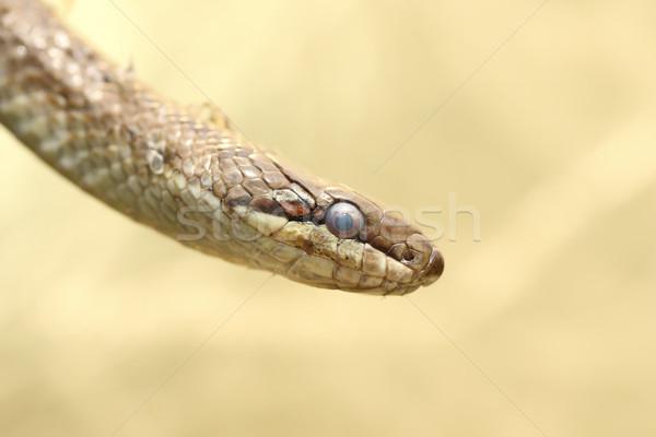 Retrato serpente natureza cor cabeça escala Foto stock © taviphoto