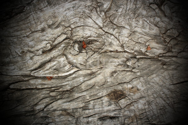 Antyczne topola cięcia drewna starożytnych Zdjęcia stock © taviphoto