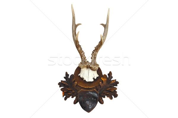 roebuck hunting trophy Stock photo © taviphoto