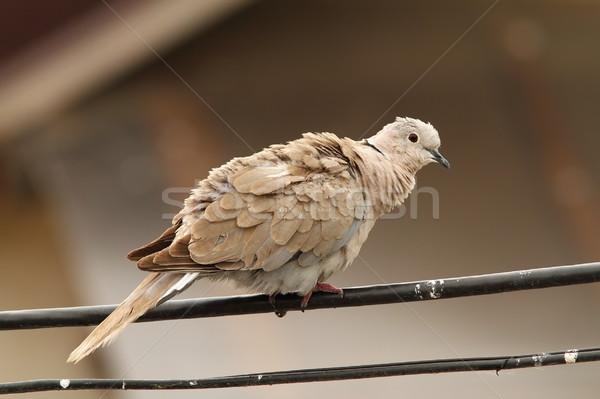 Elétrico arame em pé natureza fundo pássaro Foto stock © taviphoto