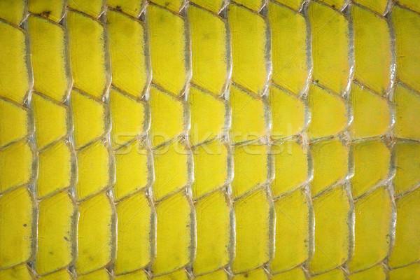 Makró kép zöld gyík has mérleg Stock fotó © taviphoto