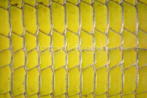 macro image of green lizard abdomen scales Stock photo © taviphoto