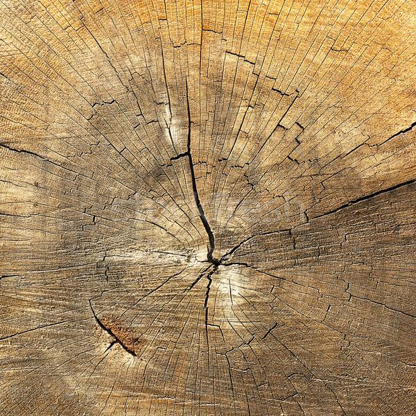 詳細 リング 木材 美しい ストックフォト © taviphoto