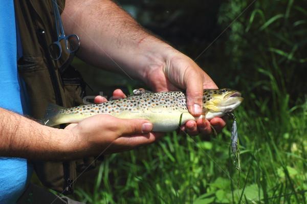 beautiful trout Stock photo © taviphoto