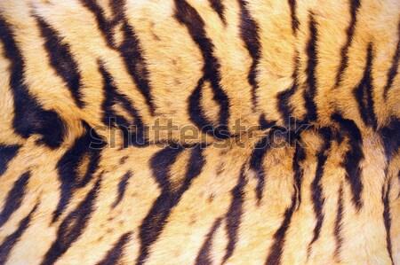 tiger pelt Stock photo © taviphoto