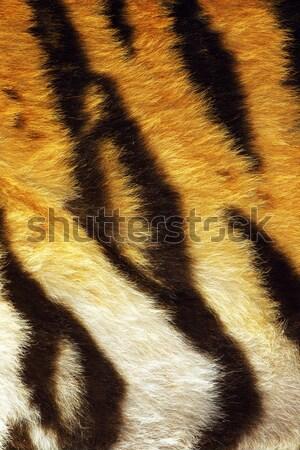 тигр мех животного природного Сток-фото © taviphoto