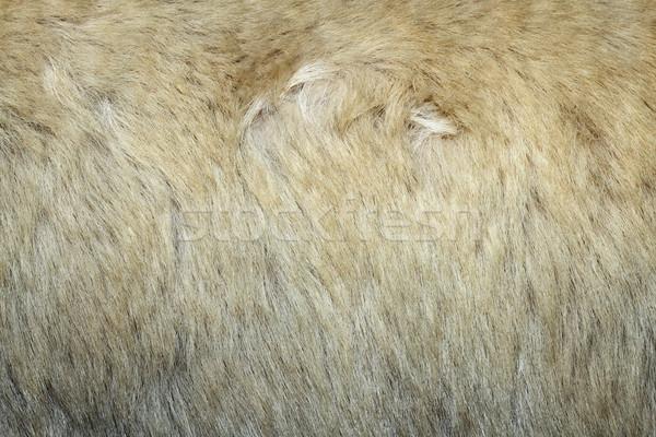 Textúra jegesmedve bőr fehér szőr terv Stock fotó © taviphoto