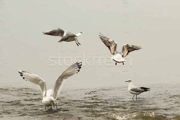 Vissen plek boos vechten ondiep water Stockfoto © taviphoto