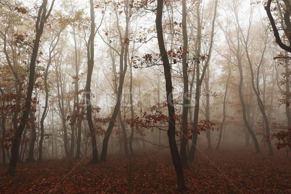 Mglisty jesienią lasu piękna późno Zdjęcia stock © taviphoto