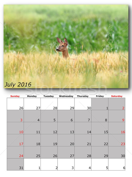 Fauna calendario 2016 impresión página disposición Foto stock © taviphoto