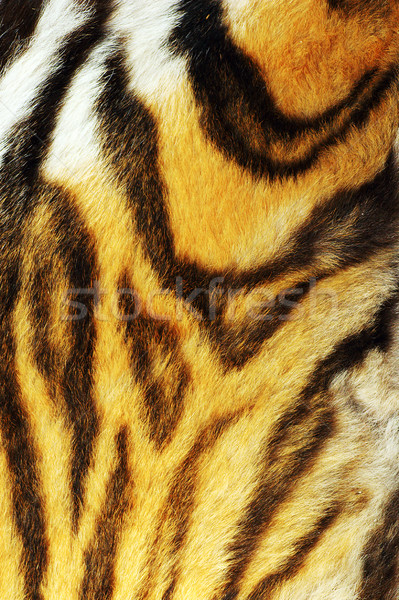 detail on stripped tiger fur Stock photo © taviphoto